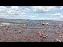 СПб финскийзалив лето море красота шумприбоя
