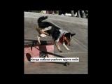 Когда собака скейтит круче тебя