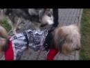 Пёс Тотоша с Ума помрачительной подружкой детства