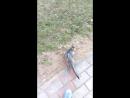 С Мичей на прогулке