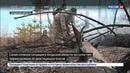 Новости на Россия 24 • На Дальнем Востоке огнем охвачены более 80 тысяч гектаров леса