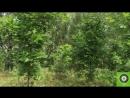 экологическая тропа Цна