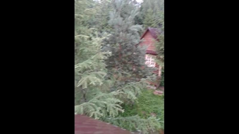 Дождливое утро в Гадюкино