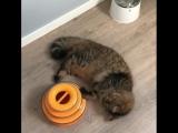 Трёхэтажный трек Petstages - лучший друг котика!