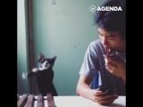 Кот играет мелодию звонка iPhone