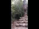 Дорога к монастырям через лес
