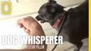 Confronting Richard Dog Whisperer