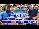 Крит Стрижка овец Как работу превратить в праздник / Κουρεσ στη Κρητη