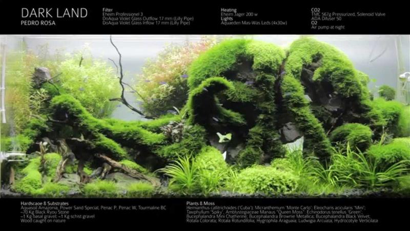 Dark Land Aquarium - Chapter III - Day 181 - Final Video