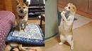 Я ржал до слез — Смешные коты и кошки 2018 КОТЫ ПРИКОЛЫ 2018 1 Лучшие подборка