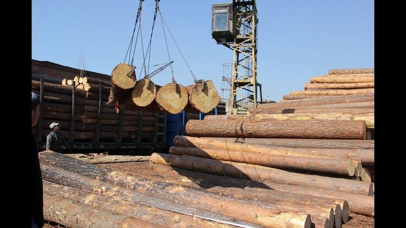 Кругляк останется в России Матвиенко потребовала ввести эмбарго на вывоз леса