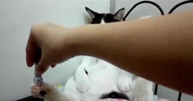 Кот познавший ДЗЕН \ Cat Alrighty ZEN · coub, коуб