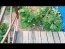 2 вид на будущий мост из деревни Новое Девяткино в посёлок Мурино