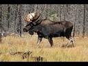 ЛОСЬ Охота в Якутии