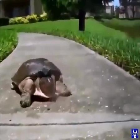 2 Stroke Turtle