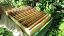 2 Часть Результат объединения роя из ловушки через газету с пчелосемьёй