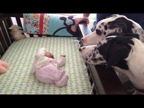 Родители Оставили Её Одну с Собаками Когда Вернулись Они Были Ошеломлены
