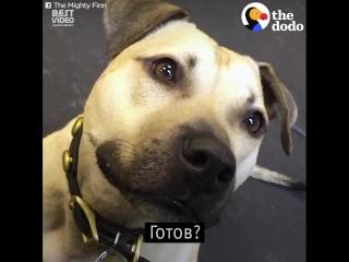Пес сходи с ума, когда видит пиццу