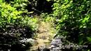 Лесной ручей, природа, пение птиц, звуки природы, на берегу, шум, звук воды. Релакс, медитация.