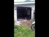 Необычные гаражные ворота