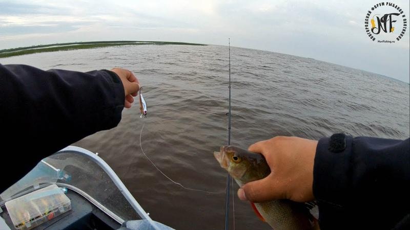 Ловля окуня на спиннинг в июле. Щука на спиннинг. Рыбалка на Ильмене.
