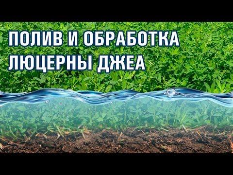 11-серия. Как правильно поливать и обрабатывать люцерну (28-06-2018)