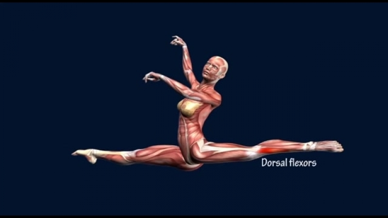 SLs How to Grand Jete Muscle Anatomy Training Program EasyFlexibility