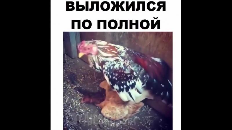 За*бался😂