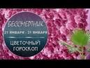 Цветочный гороскоп Бессмертник с 21 01 по 31 01