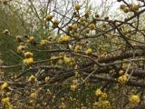 Когда цветет календула всю зиму!?
