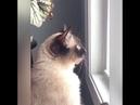 Приколы с кошками, что они вытворяют, смешное видео, нету слов...