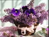Flori de liliac (Ernesto Cortazar - Flowers that last forever)