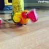 'I think my bird is broken ' 