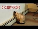 Приколы с котами и смешная ОЗВУЧКА животных – Ржака до слез 2018 от PSO