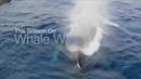 Китовые войны · coub коуб