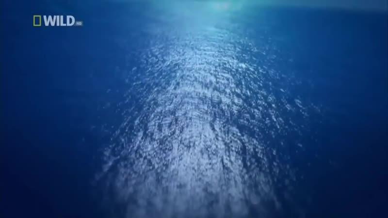 Самые странные в мире животные ( В океане )
