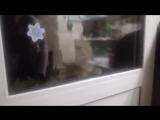 Открой мне дверь,Говорящий кот???