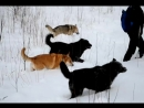 Февральская прогулка наших собак