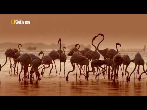 Дикая Шри Ланка. Побережье гигантов (документальный фильм) [HD]