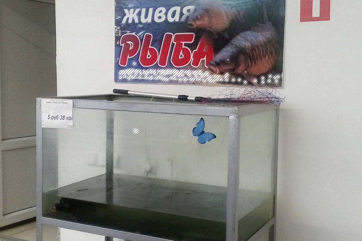 Можно ли купить локтышовскую рыбу в Ганцевичах?