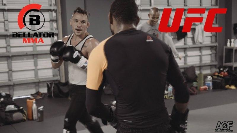 Bellator MMA vs UFC - 15 Year Fued: Michael Chandler vs Michael Johnson bellator mma vs ufc - 15 year fued: michael chandler vs