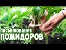 Подвязка Томатов 🍅 как вырастить помидор 🍅 сад огород