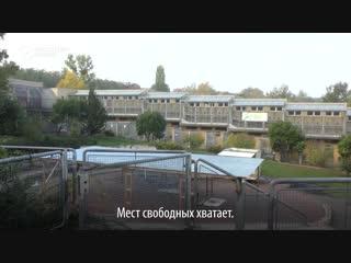 Как австрийцы спасают животных из России и Беларуси