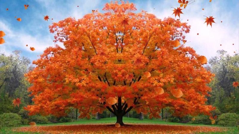 Детская песня Осень раскрасавица