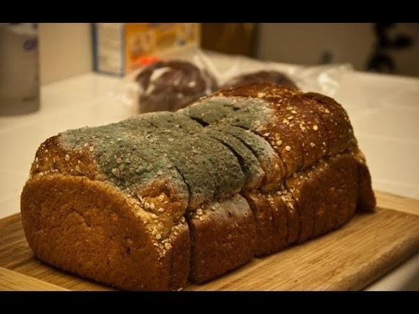 5 простых советов, которые помогут защитить хлеб от плесени