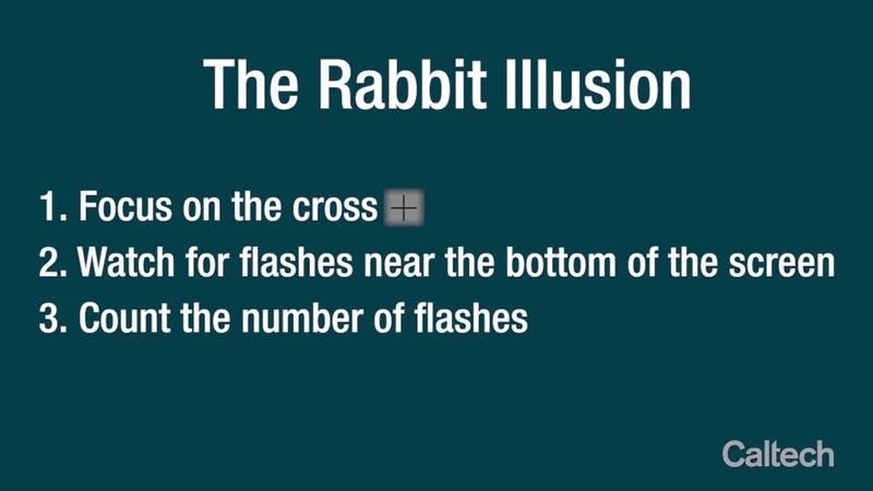 The Rabbit Illusion