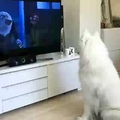 Doggy Lovers on Instagram Gary, quit it! Youre going to start a howl!