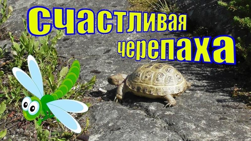 Первая прогулка сухопутной черепахи Вафельки