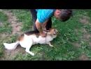 Джет - дружелюбный пёс