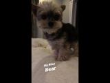 Instagram Story Danielle Jonas